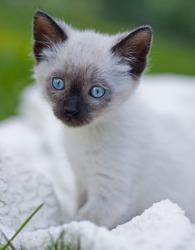 adorable playful kitten