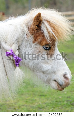 stock photo : Adorable pony with cute hairstyle in farm