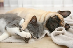 Free Cats And Dogs Stock Photos Stockvaultnet