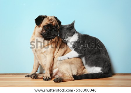 Adorable pug and cute cat sitting together on floor #538300048