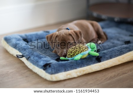 Adorable puppy laying down on his bed with a toy