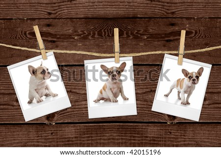 Adorable Puppy Pictures Hanging on a Rope