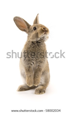 Adorable rabbit isolated on a white background