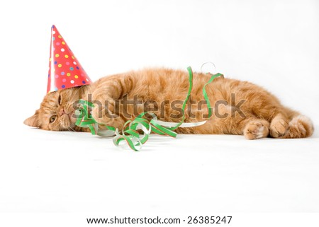 adorable red cat having a birthday party