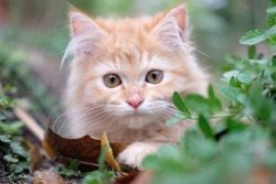 adorable red kitten laying on the grass in the garden. Cute little kitten with green leaves outdoors.
