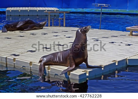 Adorable seal at the zoo in Barcelona, Spain. Sea lion. Biology, biological, zoology, zoological.                           stock photo