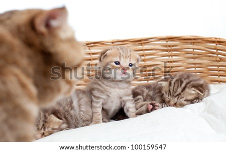 Adorable small kitten in wicker basket