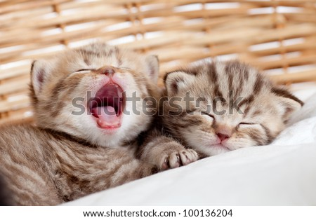 Adorable small kittens in wicker basket