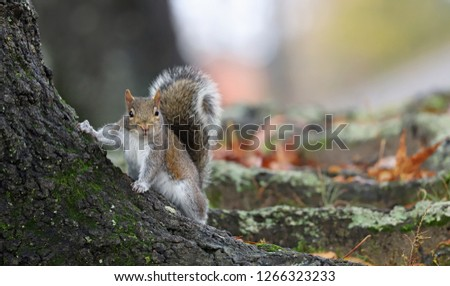 Adorable squirrel senior photo