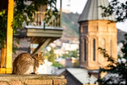 Adorable street cat sitting with church in background in Tbilisi Georgia at sunrise