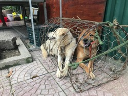 Adorable street dogs in cage waiting to be killed, roasted and eaten above a spitfire, photo along the street in Ha Giang district, Northern Vietnam