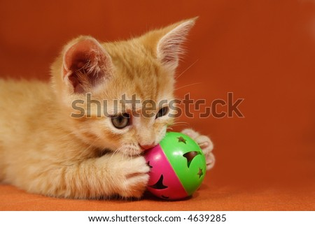 Adorable tabby kitten playing with a ball