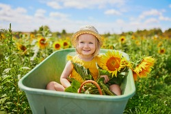 Adorable toddler girl in straw hat sitting in wheelbarrow near sunflower field at farm. Farming and gardening for small children. Outdoor summer activities for little kids