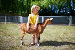 Adorable toddler girl in yellow dress and straw hat playing with goats at farm. Child familiarizing herself with animals. Farming and gardening for small children. Outdoor summer activities for kids
