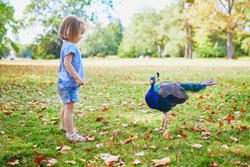 Adorable toddler girl with peacock in park. Child visiting a zoo. Outdoor summer activities for kids
