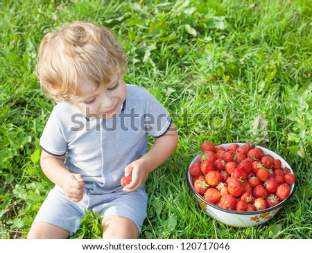 Adorable toddler with bowl strawberries on organic berry farm