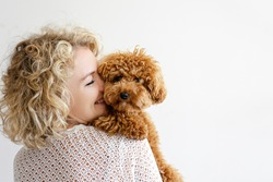 Adorable toy poodle puppy in arms of its loving owner. Small adorable doggy with funny curly fur with adult woman. Close up, copy space.