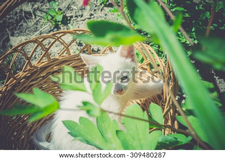 Adorable white kitten sitting in the woven basket, vintage effect.