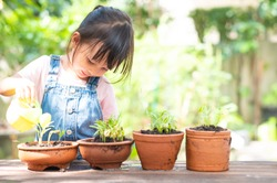 Adorable 3 years old asian little girl is watering the plant  in the pots in the garden outside the house, concept of plant growing learning activity for preschool kid. And child education of nature.
