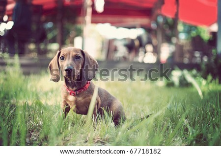 adorable young dog in the grass