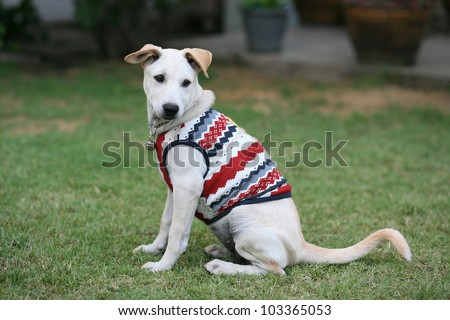 Adorable young dog wearing cloth on the grass field during winter season