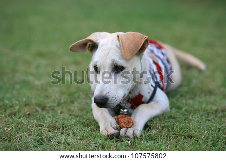 Adorable young dog with sweater holding brick on legs at the grass field