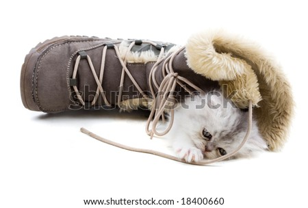 Adorable young kitten playing with winter boots