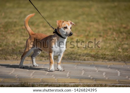 Adoreble mixed breed dog posing in the park   #1426824395