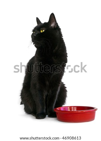 Adult black cat with green eyes sitting on a white background next to red empty food bowl