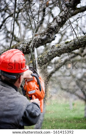 Adult cutting trees with chainsaw and tools