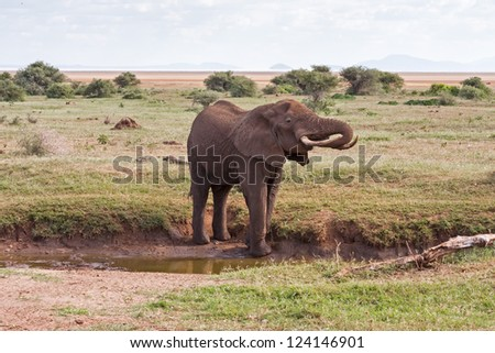 Adult elephant with big tusks on small river bank against savanna shrubs background and distance view on mountains. Lake Manyara National Park, Tanzania, Africa.