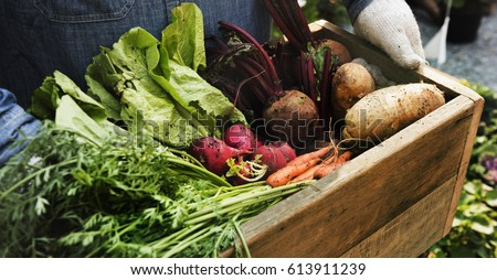 Adult Farmer Man Holding Fresh Local Organic Vegetable