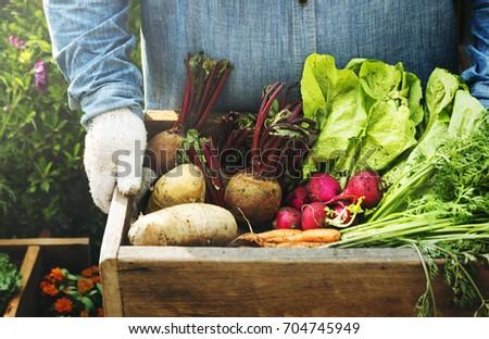 Adult Farmer Man Holding Fresh Local Organic Vegetable Foto d'archivio ©