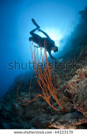 stock photo : Adult male scuba diver photographing a tropical coral reef.