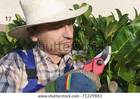Adult man (gardener) in the blue overalls and straw hat cutting tree with a pruning shears
