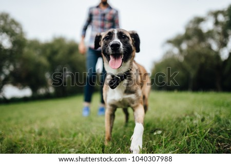 Adult stylish man playing with pet. Family outdoor. Animal lover. Happy dog enjoying freedom. Terrier breeding puppy have fun with owner. Furry crazy canine training at nature. Friends together. - Shutterstock ID 1040307988