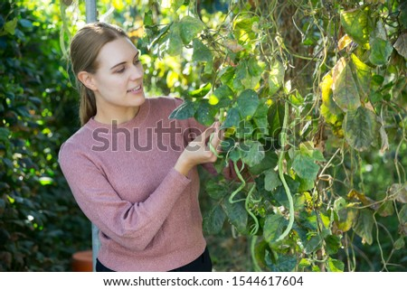 Adult woman farmer gardening on plantation, taking care of legumes plants