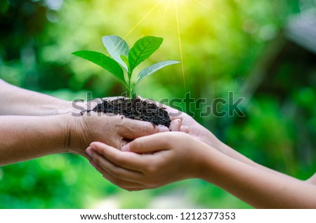 Adults Baby Hand tree environment Earth Day In the hands of trees growing seedlings. Bokeh green Background Female hand holding tree on nature field grass Forest conservation concept #1212377353