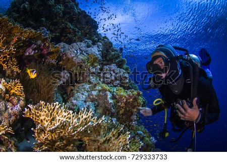 Adventure while diving. Beautiful colorful reefs of the Red Sea. Ras Mohammed. Egypt, Red Sea. #729333733