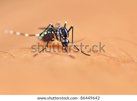 Aedes mosquito bite on skin