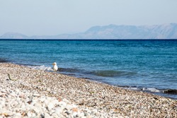 aegean sea with a seagull on a sunny day, horizontal