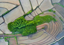 Aerial and top angle view of terraced paddy field after rice planting and metasequoia forest near Pyeongtaek-si, South Korea