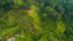 Aerial bird's eye view of the paddy field