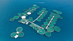 Aerial drone photo of large fish farming unit of sea bass and sea bream in growing cages in calm waters