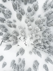 Aerial drone photography of the frozen forest in Czech Republic this winter. All the trees are coverend by the snow and ice.