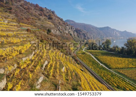 aerial drone shot over colorful steep terrace vineyards with yellow ripe grapevines, with a road through the hills of Wachau valley and Danube Dürnstein Weißenkirchen Lower Austria fall autumn season #1549753379