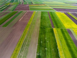 Aerial drone view, agricultural field, green and yellow parcels for agricultural background.