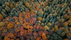 Aerial drone view of a mountain forest with colorful autumn tree color textures. Harz Mountains National Park in Germany