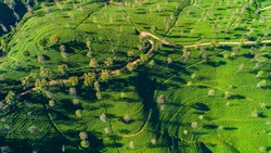 Aerial. Famous green tea plantation landscape view from Lipton's Seat, Haputale, Sri Lanka.