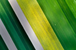 Aerial image of agricultural field with different cultures and colors in geometric shape